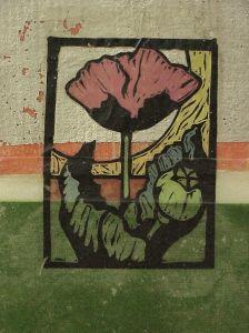 14 - Print- Pink Poppy